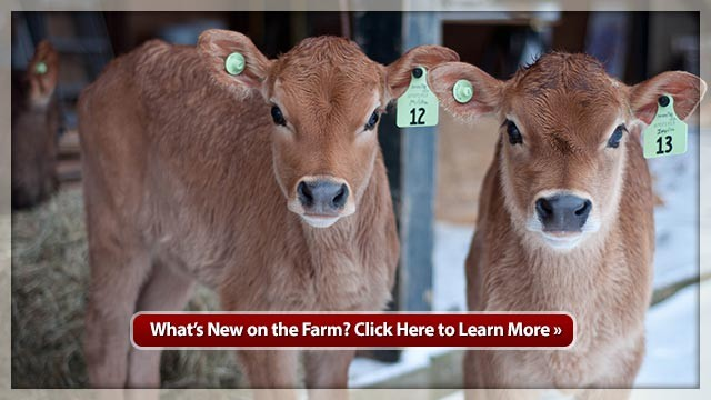 What's New on the Farm?